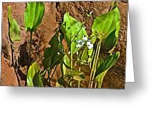 Aquatic Arrowhead In Iguazu Falls National Park-argentina  Greeting Card