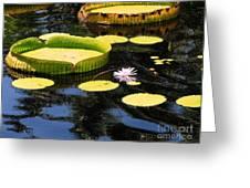 Aquatic Life Greeting Card