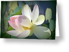 Aquatic Nymph - Waterlily Greeting Card