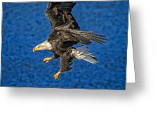 Aquila Greeting Card