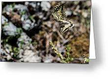 Aquino's Butterflies Greeting Card