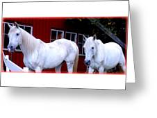 Arab Horses At Home, Behind Their Fence   Greeting Card