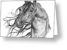 Arabian Head Greeting Card