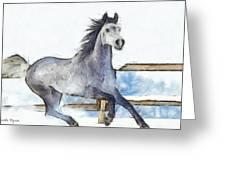 Arabian Horse And Snow - Pa Greeting Card
