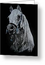 arabian horse I Greeting Card