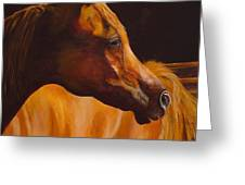 Arabian Horse Oil Painting Greeting Card