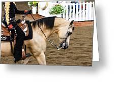 Arabian Show Horse 5 Greeting Card