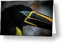 Aracari Greeting Card