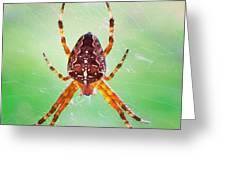 Arachnid Greeting Card