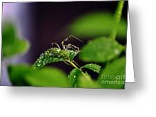 Arachnishower Greeting Card
