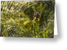 Araneus Morning Greeting Card