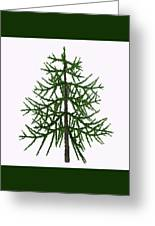 Araucaria Sp Tree Greeting Card
