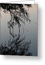 Arbor Reflections Greeting Card