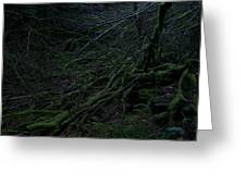 Arboreal Forest Greeting Card by Jim Thomson