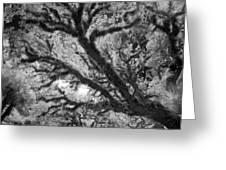 Arboreal Plateau 1 Greeting Card