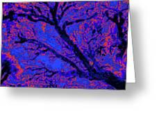 Arboreal Plateau 10 Greeting Card