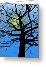 Arboreal Sun Greeting Card