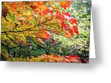 Arboretum Autumn Leaves Greeting Card
