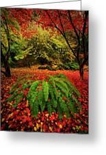 Arboretum Primary Colors Greeting Card