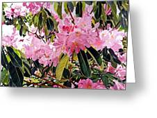 Arboretum Rhododendrons Greeting Card