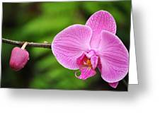 Arboretum Tropical House Orchid Greeting Card