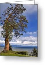 Arbutus Tree At Rathtrevor Beach British Columbia Greeting Card