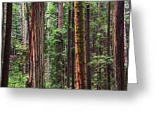 Arcata Forest Greeting Card