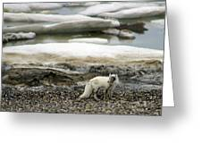 Arctic Fox By Frozen Ocean Greeting Card