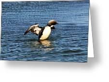 Arctic Loon Greeting Card
