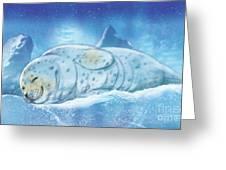 Arctic Seal Greeting Card
