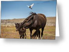 Arctic Tern Attacking Mare Greeting Card