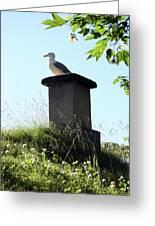 Arctic Tern Greeting Card by Helene Sobol
