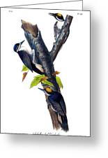 Arctic Three-toed Woodpecker Audubon Birds Of America 1st Edition 1840 Octavo Plate 268 Greeting Card