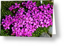 Arctic Wild Flowers Greeting Card