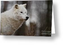 Arctic Wolf Pictures 1242 Greeting Card