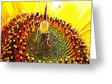 Are You Looking At Me - Butterfly Greeting Card