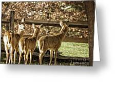 Are You Looking At Us Greeting Card