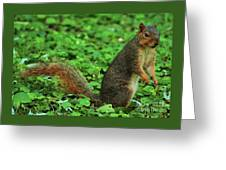 Are You Taking My Picture Again ? Greeting Card