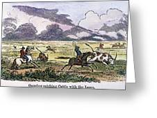 Argentina: Gauchos, 1853. Gauchos Catching Cattle On The Argentine Pampas. Wood Engraving, American, 1853 Greeting Card