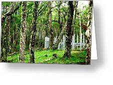 Argentina Trees Greeting Card