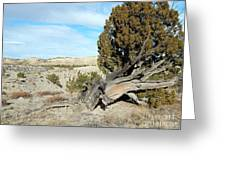 Arid Beauty Greeting Card