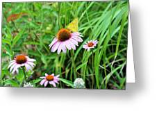 Arie's Garden Greeting Card