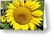 Arikara Sunflower Greeting Card