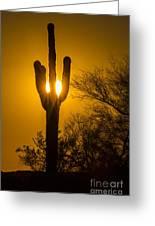 Arizona Cactus #1 Greeting Card