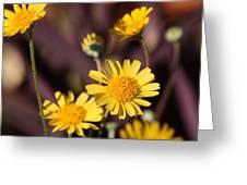 Arizona Daisy Greeting Card
