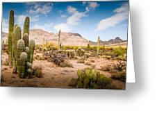 Arizona Desert #3 Greeting Card