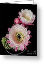 Arizona Desert Cactus Flowers Greeting Card