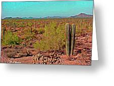 Arizona Desert Nice Place For A Walk Greeting Card