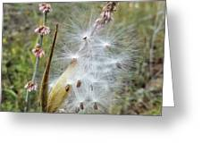 Arizona Milkweed Greeting Card