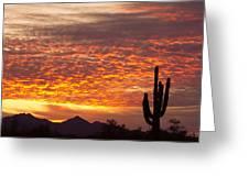 Arizona November Sunrise With Saguaro   Greeting Card